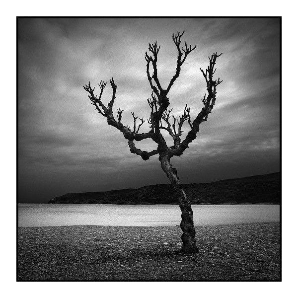 un arbre sans feuille - Arbre Sans Feuille
